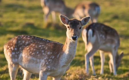 تحميل صور حيوانات (3)