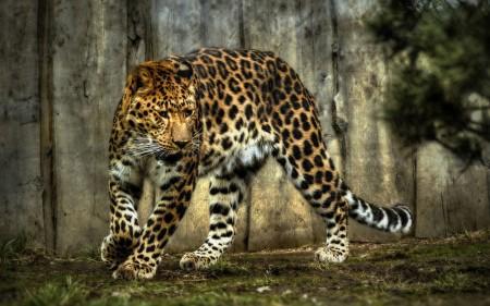 تنزيل صور حيوانات (4)