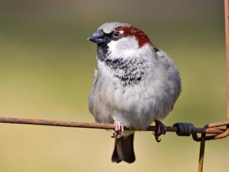خلفيات طيور (2)