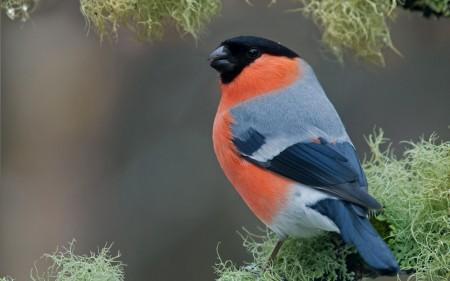 خلفيات طيور (3)