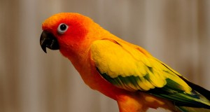 خلفيات طيور HD (1)