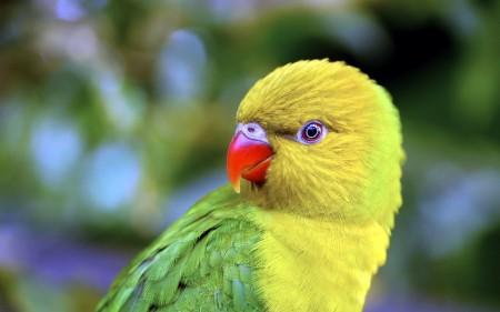 خلفيات عصافير بالصور (1)