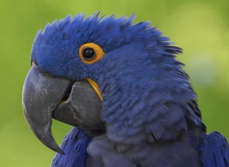 خلفيات عصافير بالصور (2)