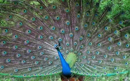 خلفيات عصافير بالصور (3)