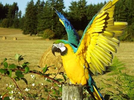 خلفيات عصافير جديدة (1)