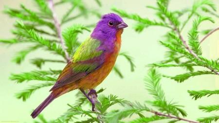 خلفيات عصافير جميلة (1)