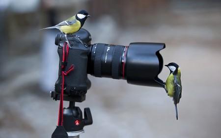 خلفيات عصافير (2)