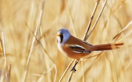 خلفيات عصافير (3)