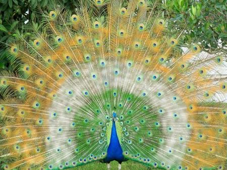 خلفيات عصافير (4)