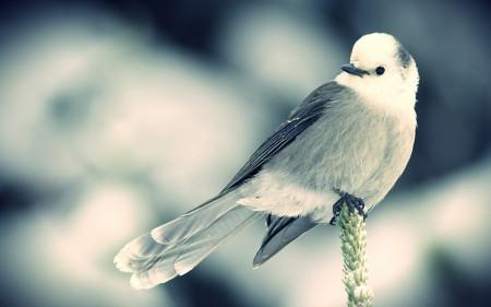 خلفيات عصافير (5)