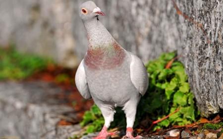 خلفيات وصور طيور (1)