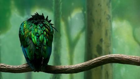 صور اجمل طيور (3)