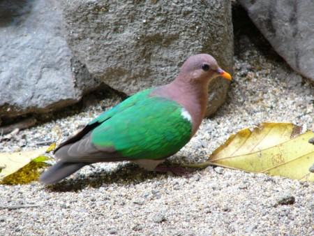 صور الطيور (1)