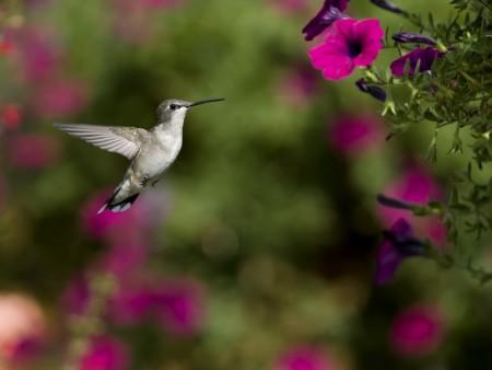 صور الطيور (3)