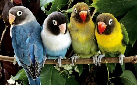 صور العصافير (1)