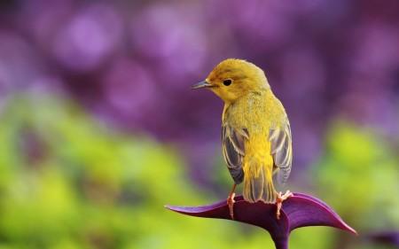 صور انواع الطيور المختلفة ملونة (3)