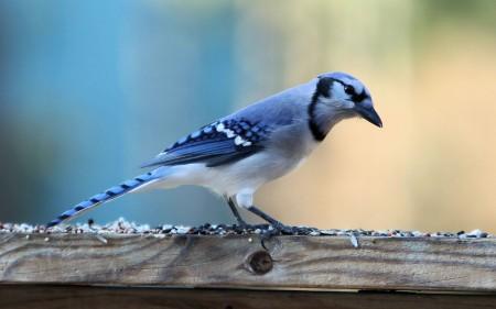 صور انواع الطيور المختلفة ملونة (4)