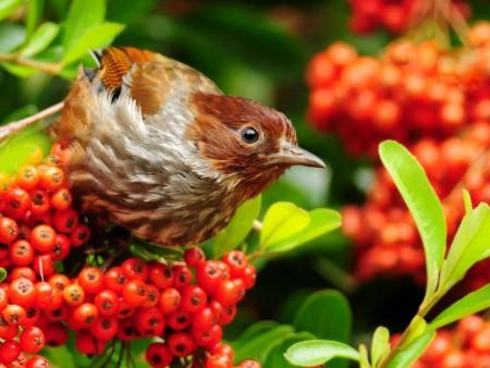 صور انواع الطيور المختلفة ملونة (5)