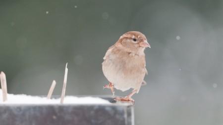 صور خلفيات طيور (1)