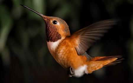 صور خلفيات طيور (2)