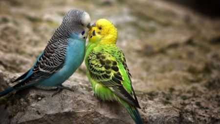 صور خلفيات طيور (3)