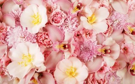 صور زهور HD (4)