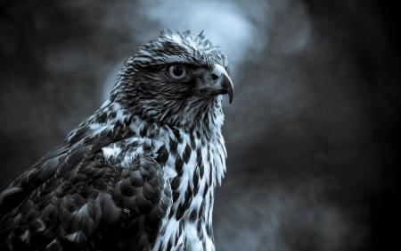 صور طيور حب (3)