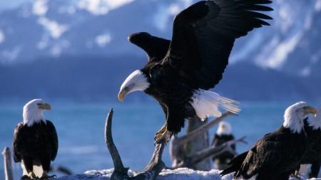 صور طيور حب (4)