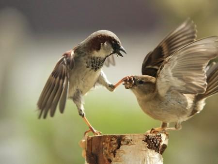 صور طيور ملونة جميلة خلفيات الطيور بانواعها (3)