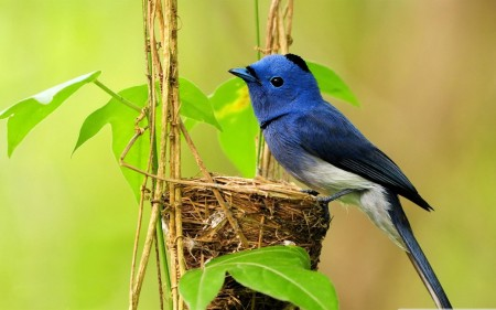 صور طيور  (3)