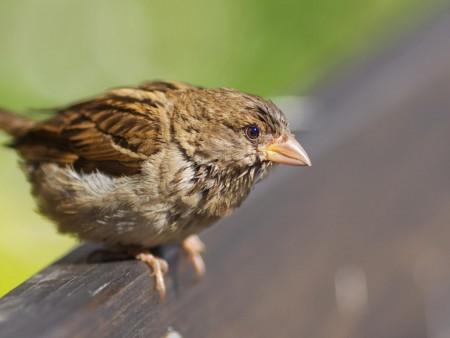 صور طيور HD (2)