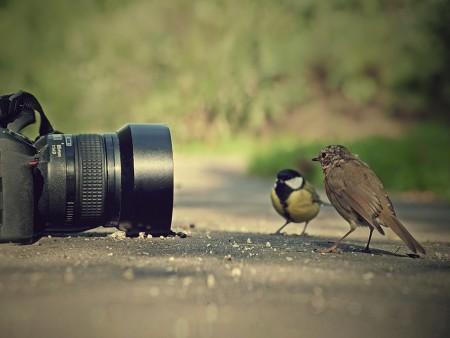 صور طيور HD (5)