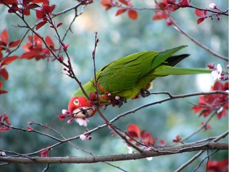 صور عصافير الزينة (3)