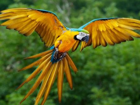 صور عصافير الزينة (4)