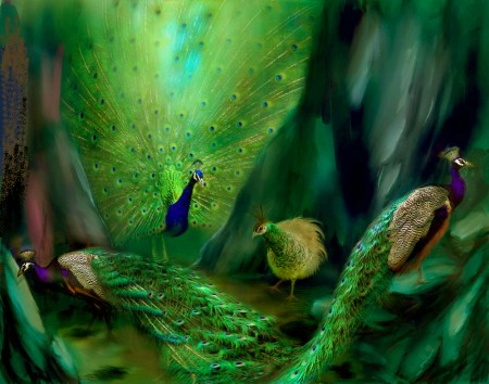 صور عصافير الكنارى (2)