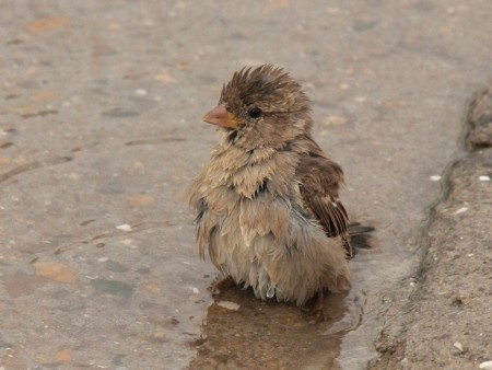 صور عصافير طيور (3)
