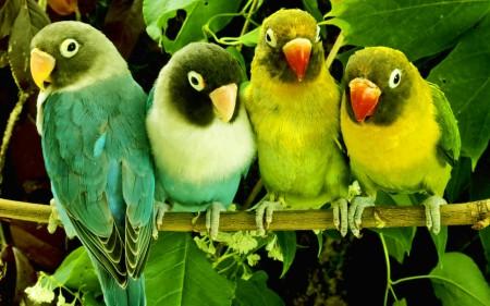 صور عصافير HD (1)