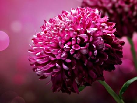 صور وخلفيات زهور وورود جميلة وجذابة ورقيقة (1)