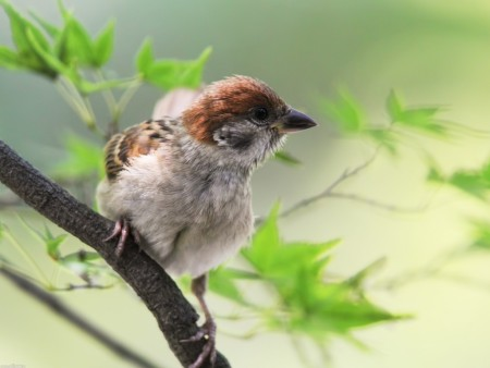 طيور بالصور بجودة HD (2)