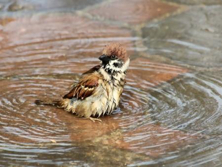 طيور بالصور بجودة HD (3)