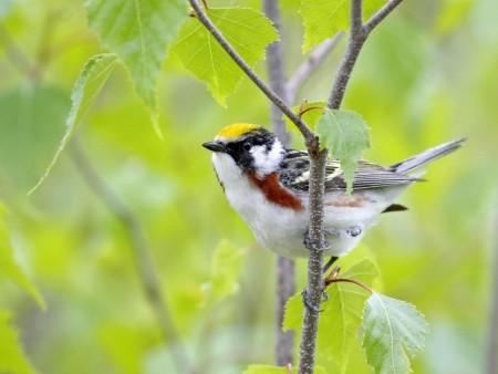 طيور بالصور بجودة HD (5)