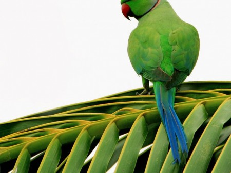 طيور بالصور (4)