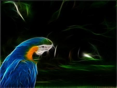 طيور جميلة (1)