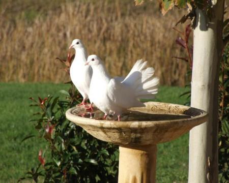 طيور جميلة (4)
