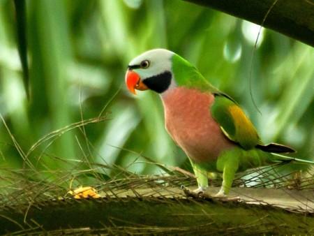 طيور غريبة (2)