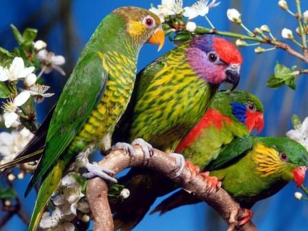 طيور غريبة (3)