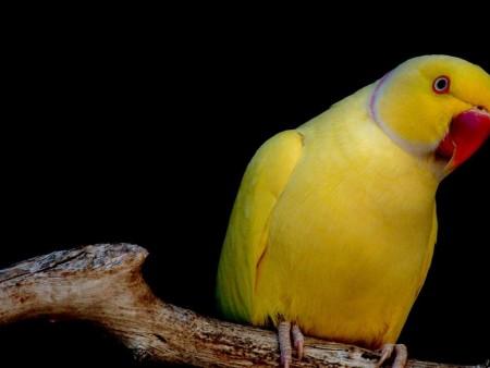 طيور غريبة (4)