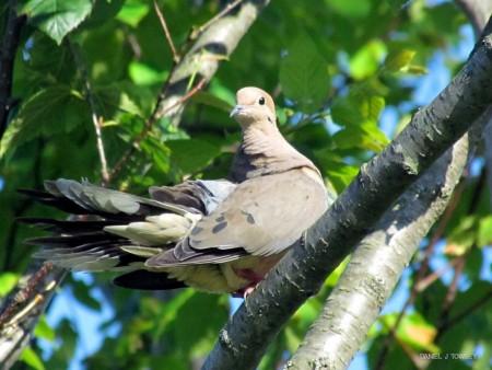 طيور مختلفة (2)