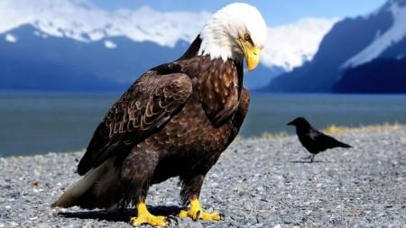طيور منوعة (2)