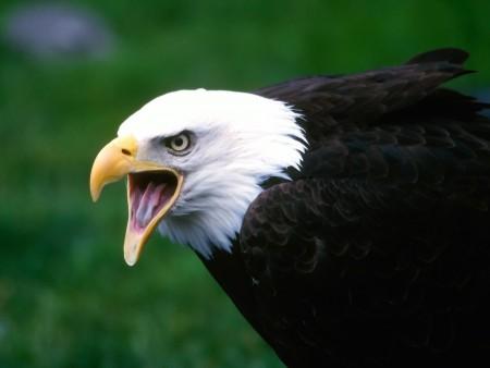 طيور منوعة (3)